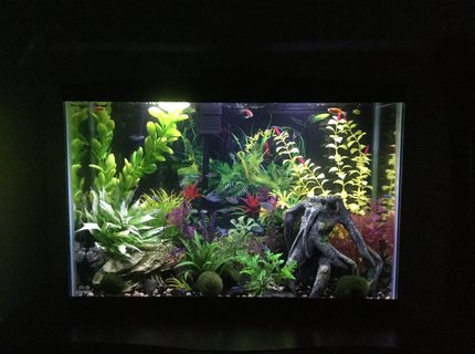 15 gallons freshwater fish tank (mostly fish and non-living decorations) - 15 gallon freshwater