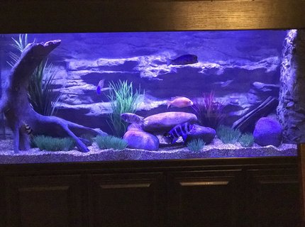 210 gallons freshwater fish tank (mostly fish and non-living decorations) - 210 tank