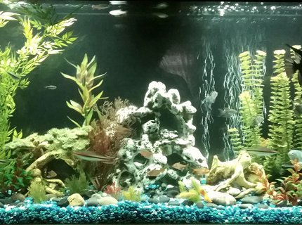 65 Gallons Fish Tanks And Aquariums | RateMyFishTank com