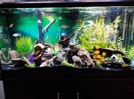 60 gallons freshwater fish tank (mostly fish and non-living decorations) - Fish paradise