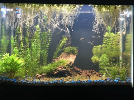 25 gallons freshwater fish tank (mostly fish and non-living decorations) - My first tank, 4 months old