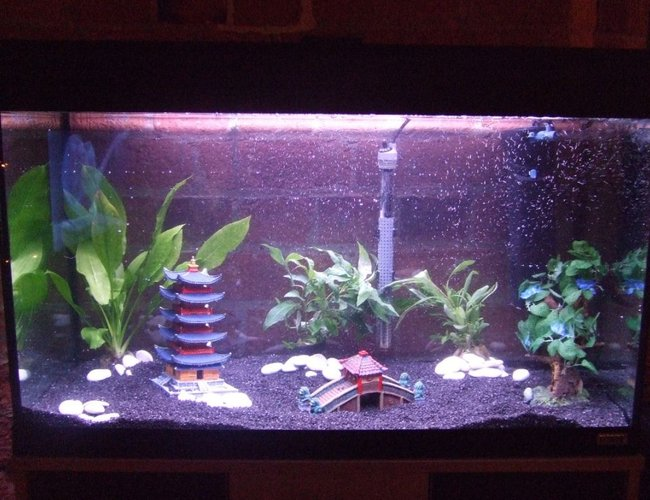 33 gallons freshwater fish tank (mostly fish and non-living decorations) - 3 real plants and 1 fake