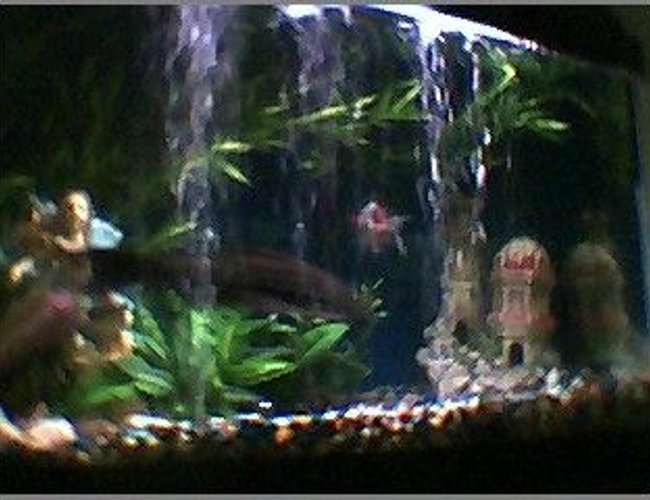 45 gallons freshwater fish tank (mostly fish and non-living decorations) - lil active this morn
