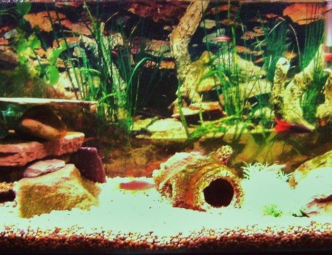 25 gallons freshwater fish tank (mostly fish and non-living decorations) - not the best pic but will update asap...