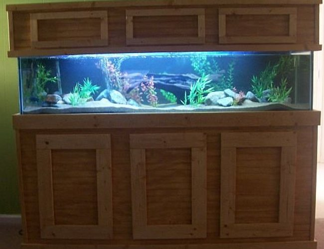 100 gallons freshwater fish tank (mostly fish and non-living decorations) - 100 gallon african cichlid tank