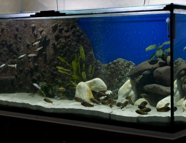 220 gallons freshwater fish tank (mostly fish and non-living decorations) - 200 gals