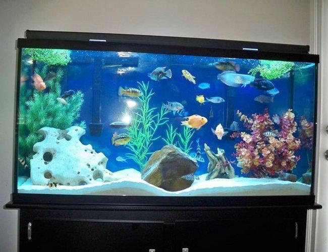175 Gallons Fish Tanks And Aquariums   RateMyFishTank.com