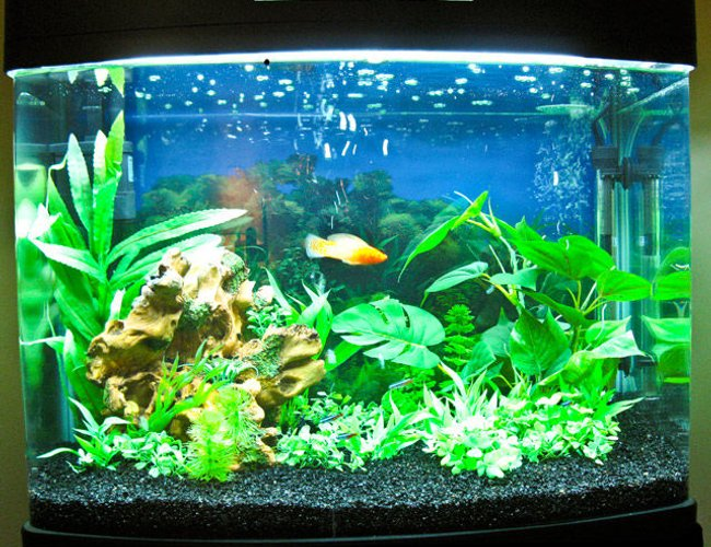 25 gallons freshwater fish tank (mostly fish and non-living decorations) - My new Hopar 25 gallon.