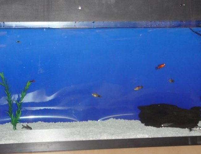 60 gallons freshwater fish tank (mostly fish and non-living decorations) - Master piece in progress