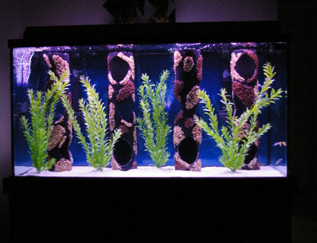 80 gallons freshwater fish tank (mostly fish and non-living decorations) - 80 Gallon malawi cichlid tank