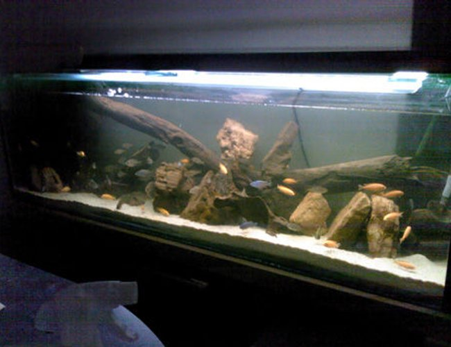 50 gallons freshwater fish tank (mostly fish and non-living decorations) - This is the front of the tank