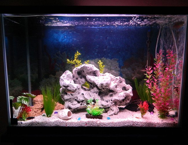 50 gallons freshwater fish tank (mostly fish and non-living decorations) - New tank arrangement.