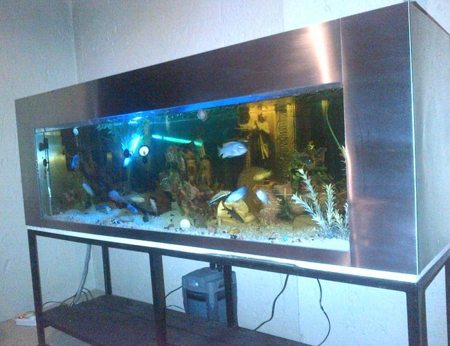 132 gallons freshwater fish tank (mostly fish and non-living decorations) - 6 Foot Stainless Steel Tank, 500