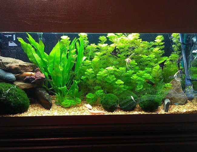 40 gallons freshwater fish tank (mostly fish and non-living decorations) - Freshwater Planted