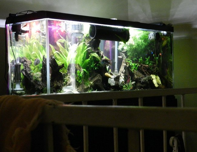 155 gallons freshwater fish tank (mostly fish and non-living decorations) - 55 gal predatory tank