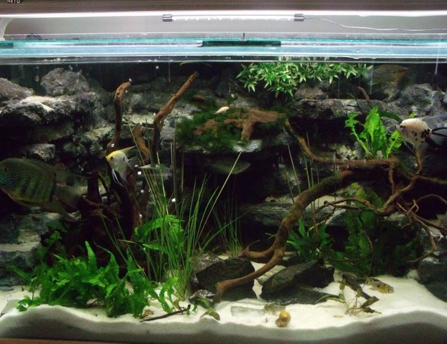 105 gallons freshwater fish tank (mostly fish and non-living decorations) - my 4ft x 2ft x2ft communal tank