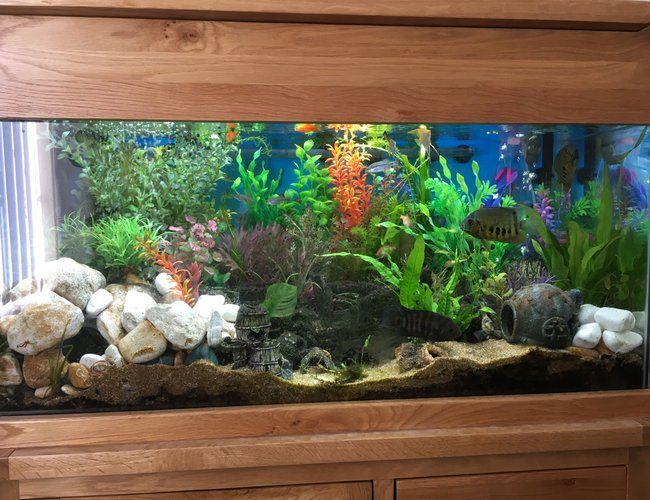 44 gallons freshwater fish tank (mostly fish and non-living decorations) - Front view of 200l Freshwater Tank