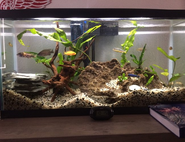 16 gallons freshwater fish tank (mostly fish and non-living decorations) - Community tank