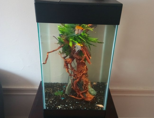 15 gallons freshwater fish tank (mostly fish and non-living decorations) - Distance view