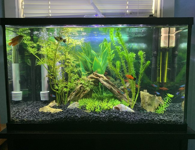 10 gallons freshwater fish tank (mostly fish and non-living decorations) - My 10 gallon semi-planted tank