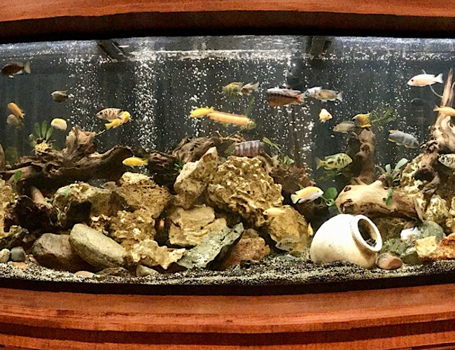 210 gallons freshwater fish tank (mostly fish and non-living decorations) - New tank,set up after a few years off from the hobby.