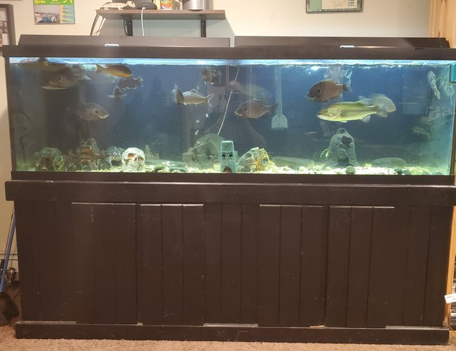 100 gallons freshwater fish tank (mostly fish and non-living decorations) - My joy