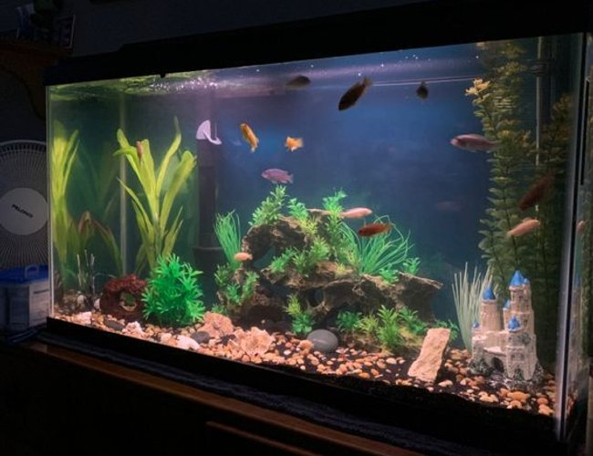 40 gallons freshwater fish tank (mostly fish and non-living decorations) - 40 gallon breeder tank