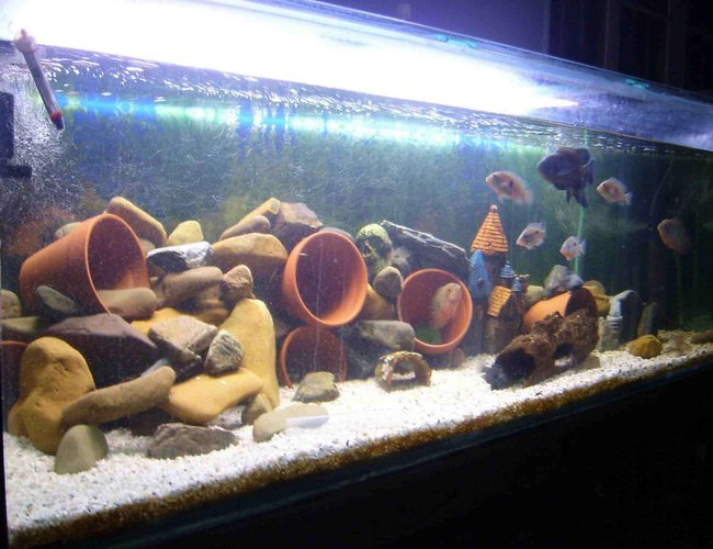 179 gallons freshwater fish tank (mostly fish and non-living decorations) - 6ft x 2ft x 2ft... 2 x 4ft Fluro Blue Lights... 2 x Aquaclear 500's... 2 x Powerheads... 1 Eheim 2229 Wet/Dry... 2 x 300w heat... Assorted air pumps.... River rocks, pots, gravel,etc etc... 679 liters
