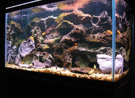 Rated #94: 58 Gallons Freshwater Fish Tank - My 58 gallon Malawi cichlid tank