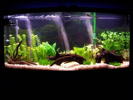 Rated #37: 72 Gallons Freshwater Fish Tank - My 72 Gallon Bowfront Tank- South American/Community