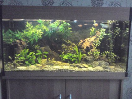 Rated #58: 200 Gallons Freshwater Fish Tank - my tank as it is now. 6 months old. sorry about the poor picture quality!