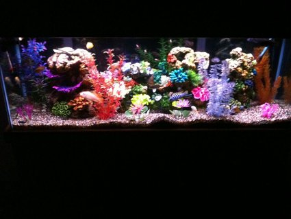 Rated #78: 55 Gallons Freshwater Fish Tank - 55 GALLON