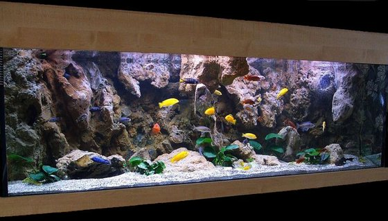 Rated #4: 180 Gallons Freshwater Fish Tank - Malawi Cliff setup