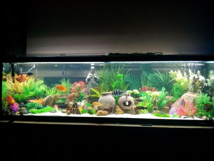 Rated #13: 125 Gallons Freshwater Fish Tank - I did this tank for new born baby girl