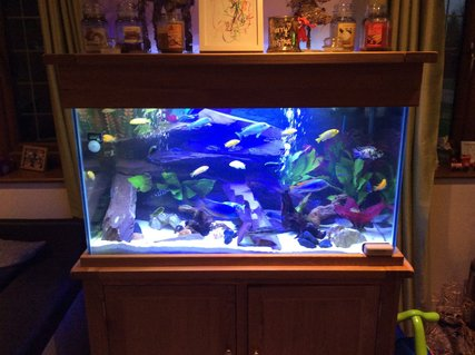 Rated #38: 75 Gallons Freshwater Fish Tank - Malawi tank, plum slate , some fake plants, small bit of driftwood.