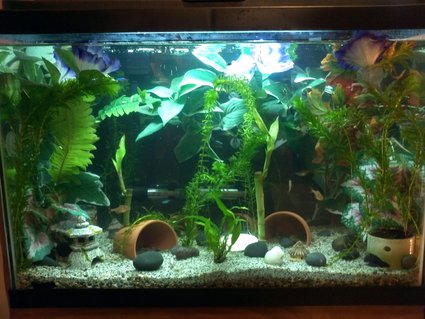 Rated #32: 20 Gallons Freshwater Fish Tank - 20 gal freshwater community tank