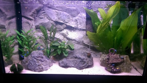 Rated #39: 90 Gallons Freshwater Fish Tank - My old 60L Tropical tank. 