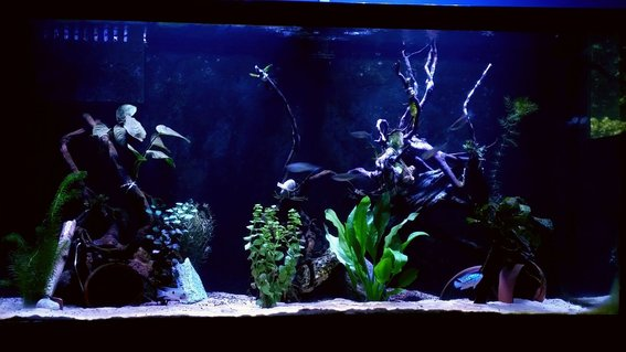 Rated #31: 90 Gallons Freshwater Fish Tank - 90 gallon new world cichlid tank