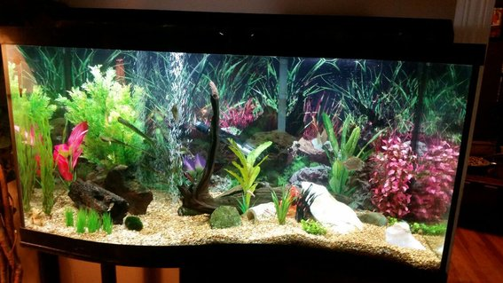 Rated #37: 90 Gallons Freshwater Fish Tank - 90 gallon wave front