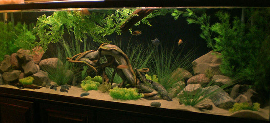 Rated #19: 135 Gallons Freshwater Fish Tank - 135 malawi