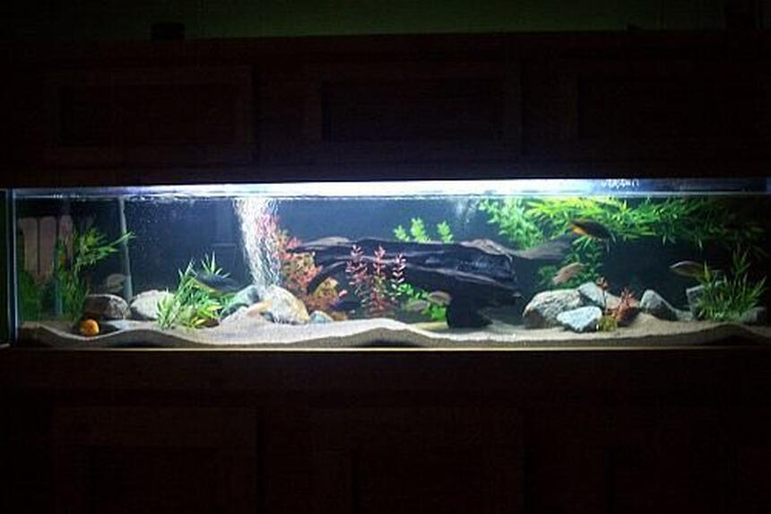 Rated #8: 100 Gallons Freshwater Fish Tank - night view- 100 gallon  african cichlid tank