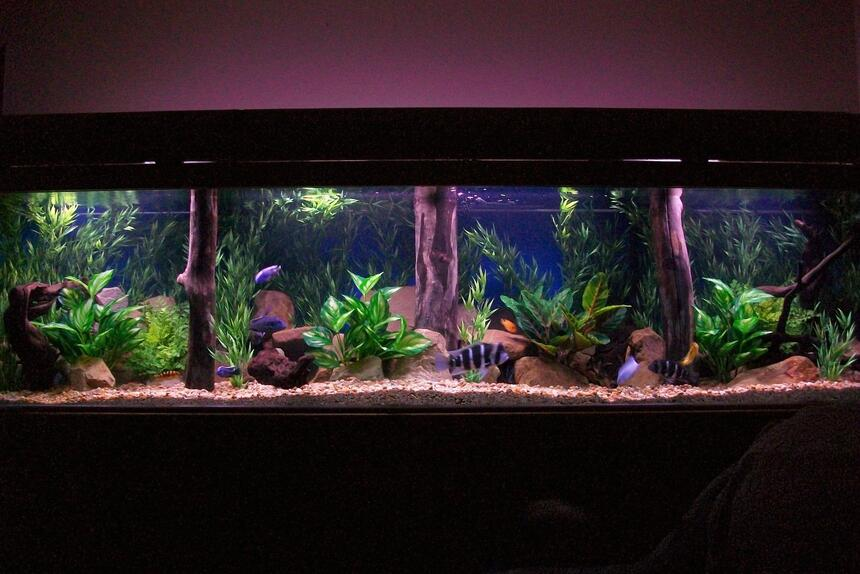 Rated #17: 350 Gallons Freshwater Fish Tank - 350 gal
