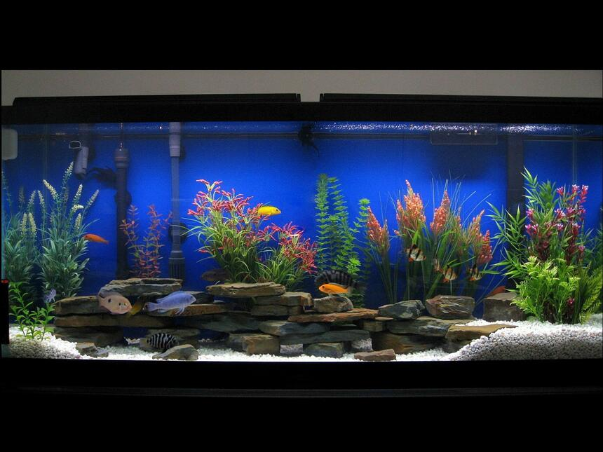 Rated #53: 75 Gallons Freshwater Fish Tank - 55 Gallon