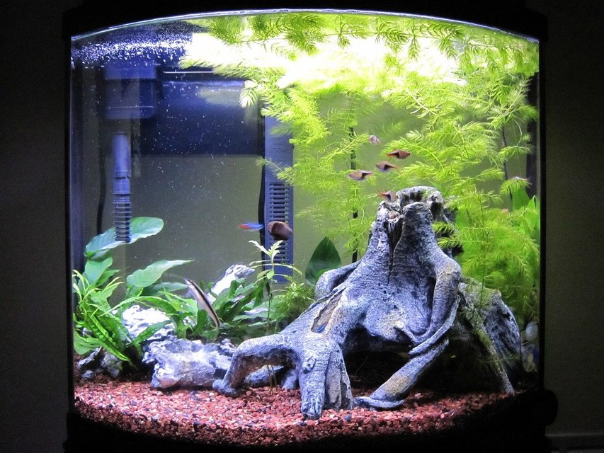Rated #52: 16 Gallons Freshwater Fish Tank - 3 Months