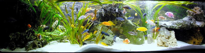 Rated #10: 132 Gallons Freshwater Fish Tank - My best TV chanell