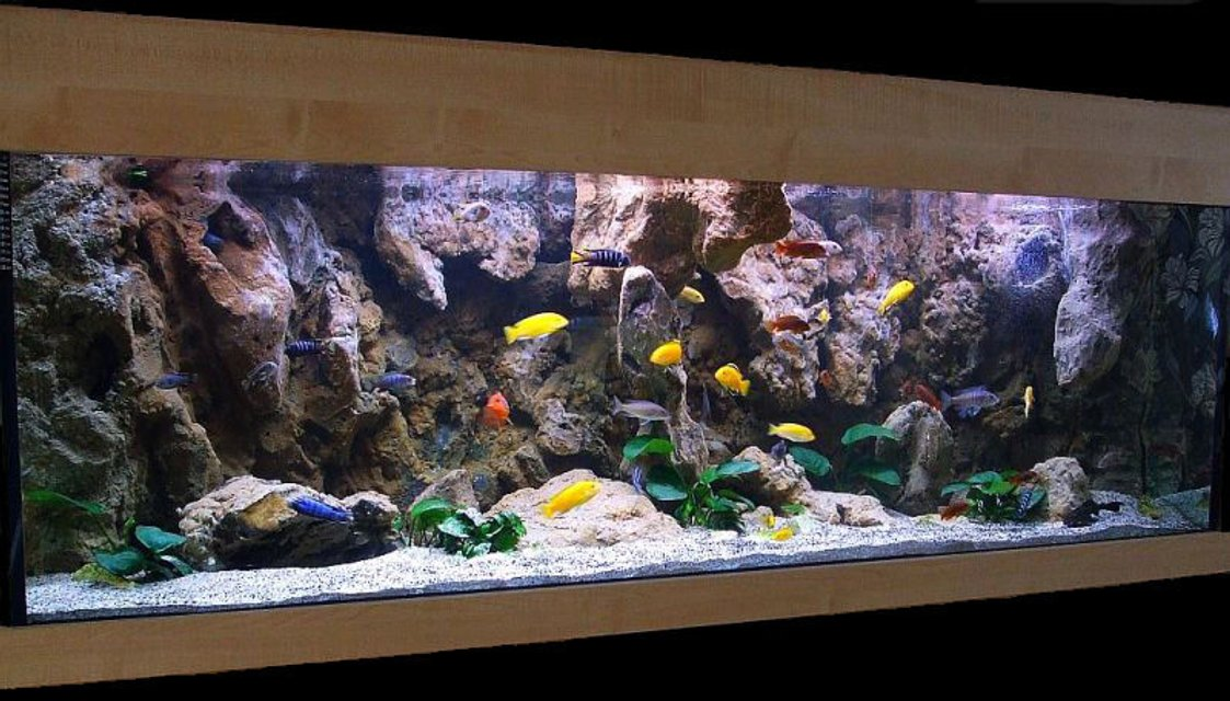 Rated #2: 180 Gallons Freshwater Fish Tank - Malawi Cliff setup
