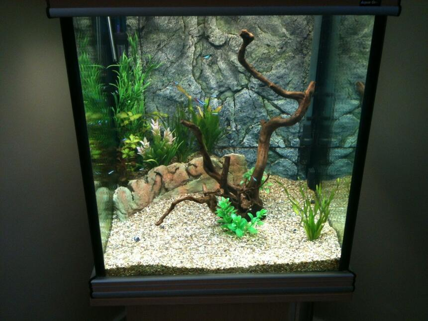 Rated #53: 43 Gallons Freshwater Fish Tank - 2nd attempt