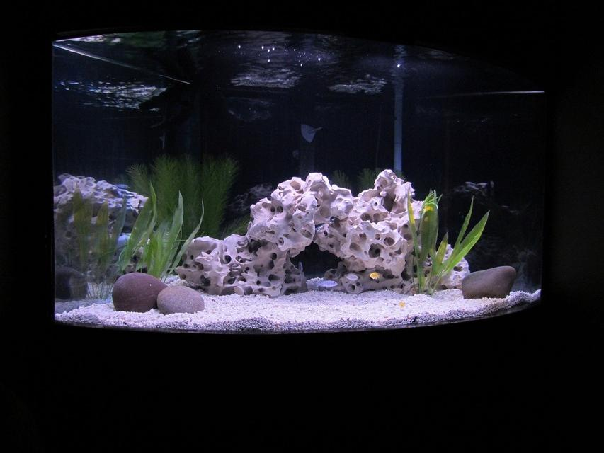 Rated #56: 70 Gallons Freshwater Fish Tank - NEW AFRICAN CICHLID SETUP