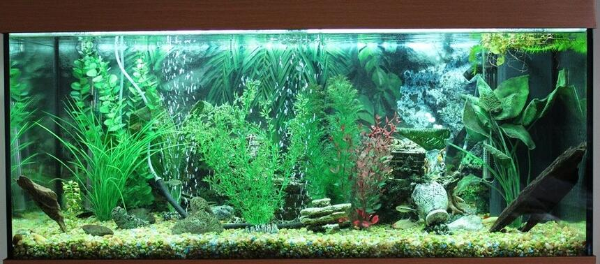 Rated #51: 50 Gallons Freshwater Fish Tank - Freshwater tank, 180 Liter, no live plants.