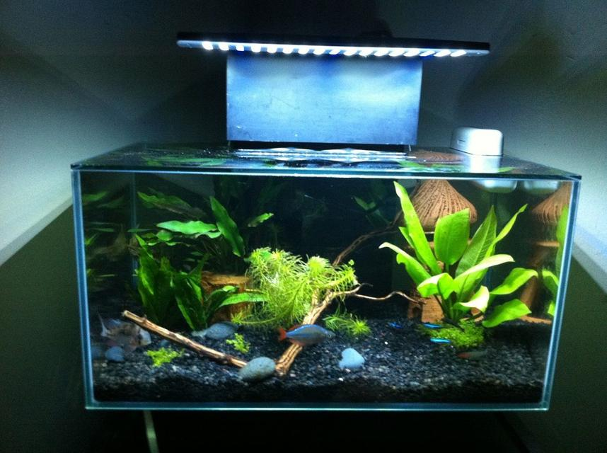 Rated #69: 6 Gallons Freshwater Fish Tank - Fluval edge After Led Mod